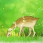 森の園日和
