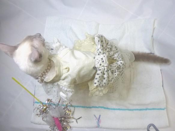 猫用ワンピース 服(ドレス風)かぶりタイプ。クリーム色系、首サイズ調整可160207 ペット服・アクセサリー 猫ねこwatanyan