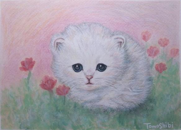 原画「白くてまるくて、ふわふわ子猫」 (額付 / パールホワイト) / ペルシャ猫 チンチラシルバー 絵画