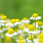AJ aroma&herb