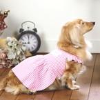 宝塚 Maison le chien