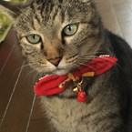 猫の首輪専門  キャットテイル