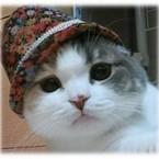 猫服屋Jna