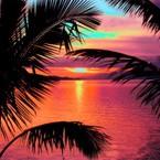 Shop Sunset