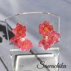 sawachika