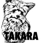 hc-takara